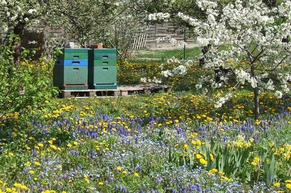 Bienen im Garten - Bild von Melanie von Orlow