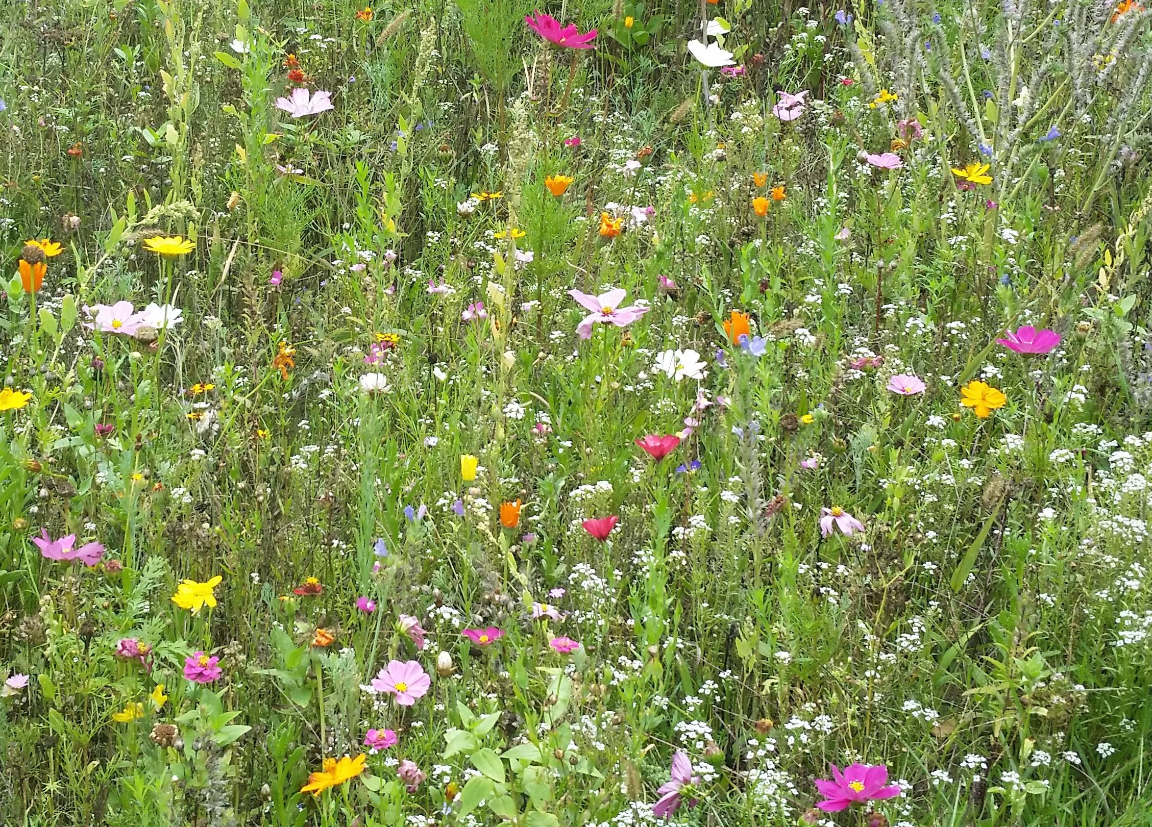 Moessinger Sommerblumenmischung