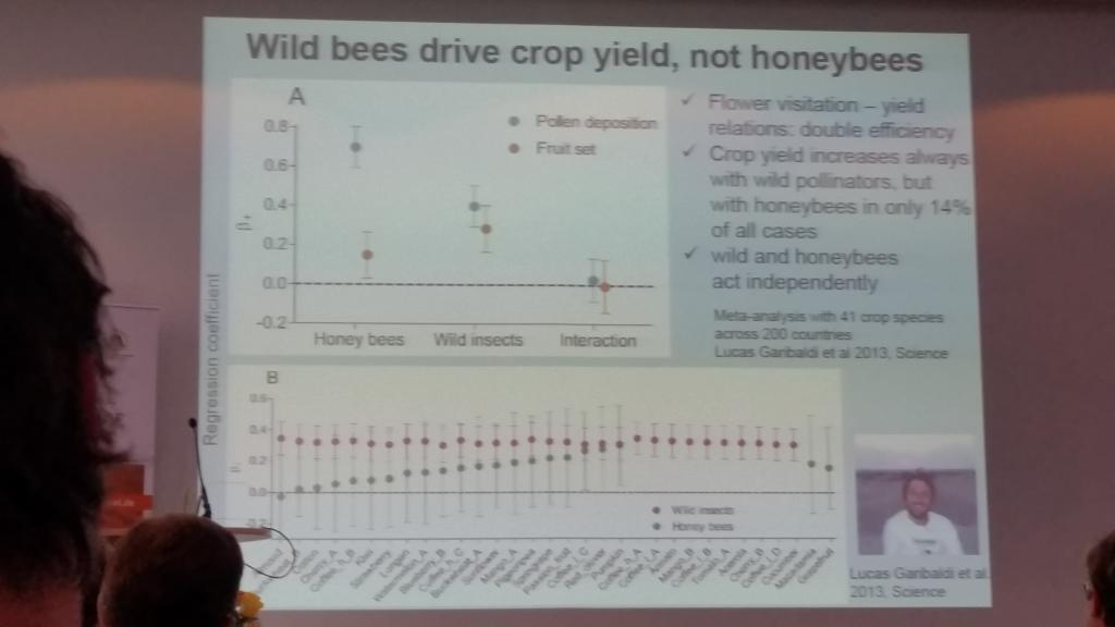 Honigbienen sind im Vergleich zu Wildbienen die schlechteren Bestäuber - trotz Pollenübertrags findet oft keine Fruchtbildung statt.
