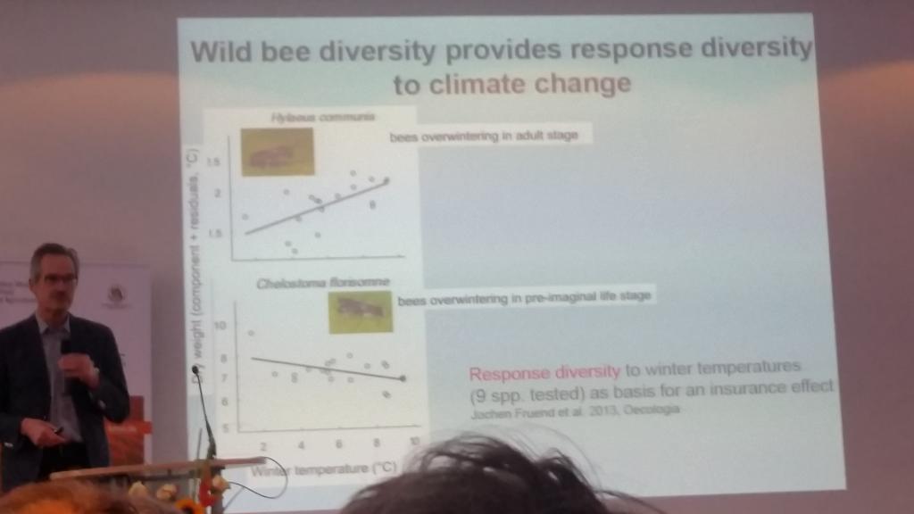 Verschiedene Bienen überwintern unterschiedlich je nach Witterung - und sichern so die Bestäubung unabhängig vom Wetterverlauf im Winter