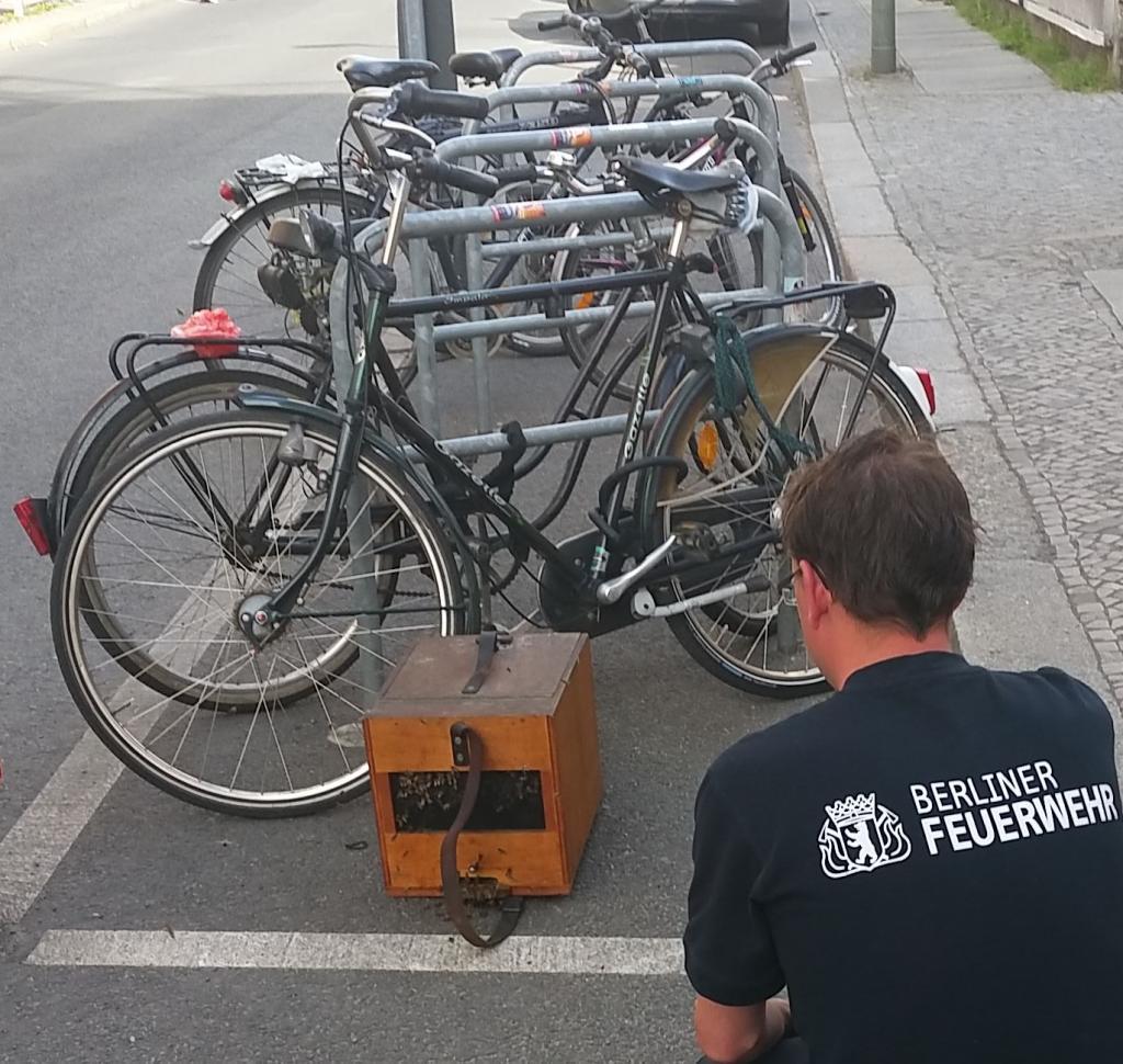 Fang des Fahrradschwarms (Bild: P. Siebert)