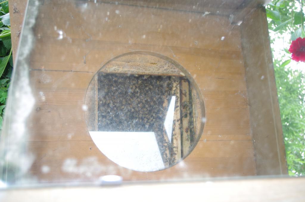 ...bietet über einen Spiegel den Blick von unten in das Treiben der Bienen ohne sie zu stören.