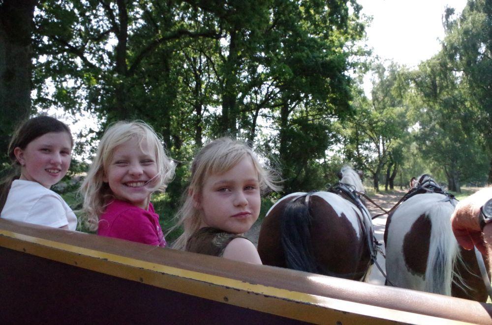 Da strahlen die pferdevernarrten Junkimkerinnen!