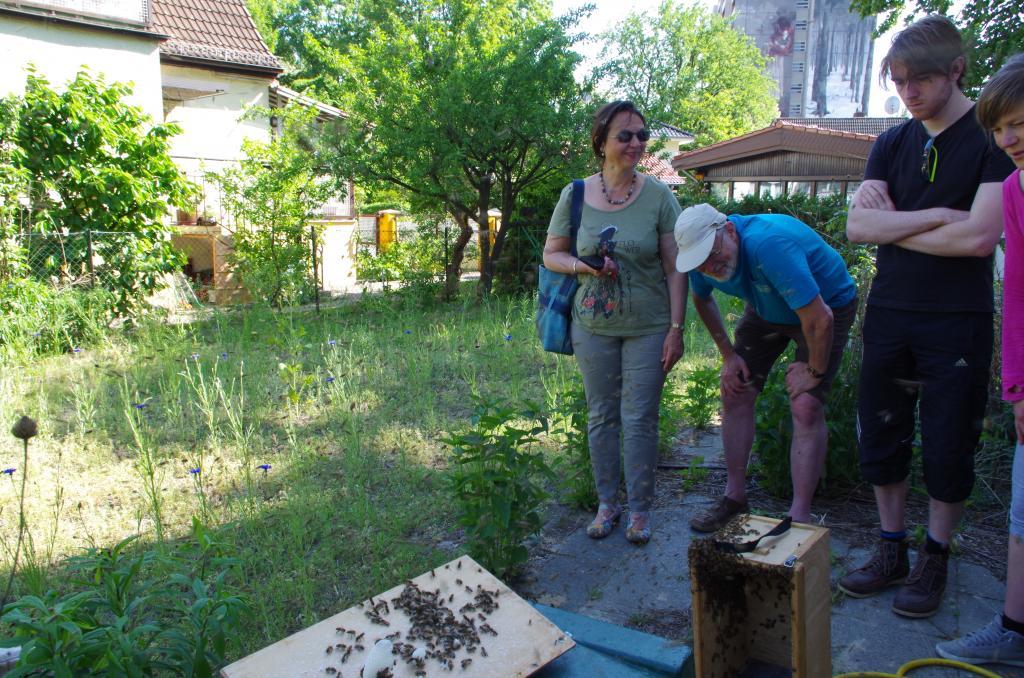 Das Spektakel sieht wild aus aber die Bienen sind ganz friedlich.
