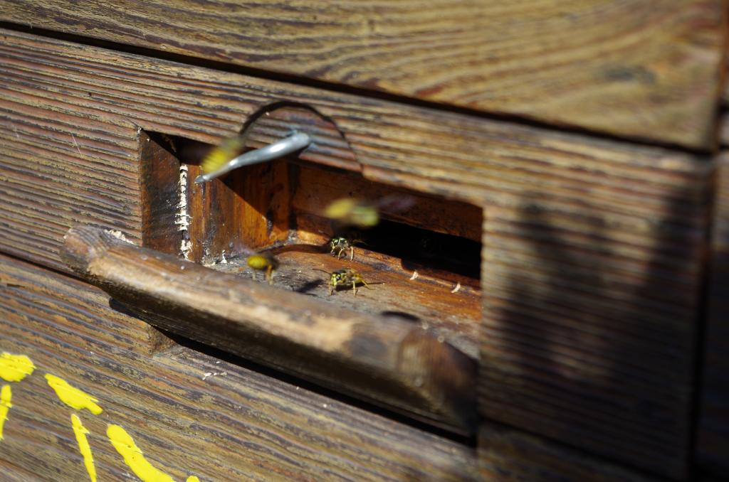 ...denn auch der von Wespen besiedelte Bienenkasten darf so bleiben.