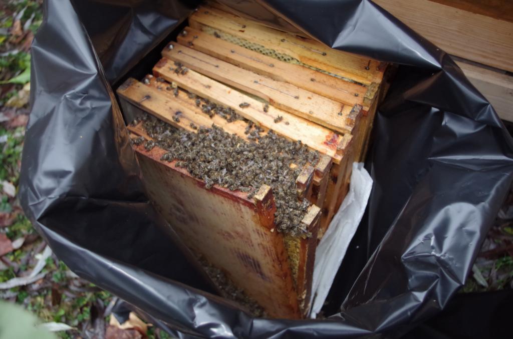 Das traurige Ende eines Bienenvolks!