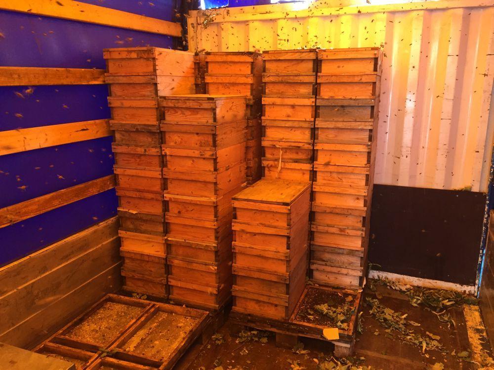 Der Inhalt vom Anhänger war aber auch zu verlockend: Dutzende leergeschleuderter Honigzargen und auf dem Boden verkleckerter Honig.