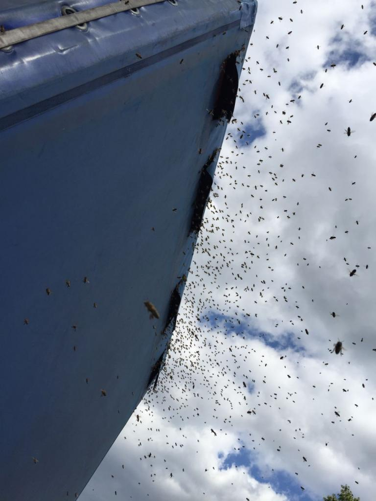 Tausende Bienen dringen durch die Lüftungsschlitze in den Lkw ein.<br />