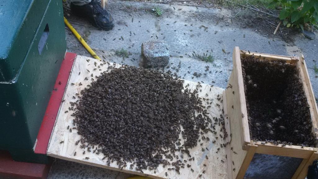 ...und die Bienen abgestossen...