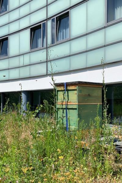 """<a href=""""/profile-mitgliederprofil/941"""">Imkern auf den Dächern Berlins</a>"""