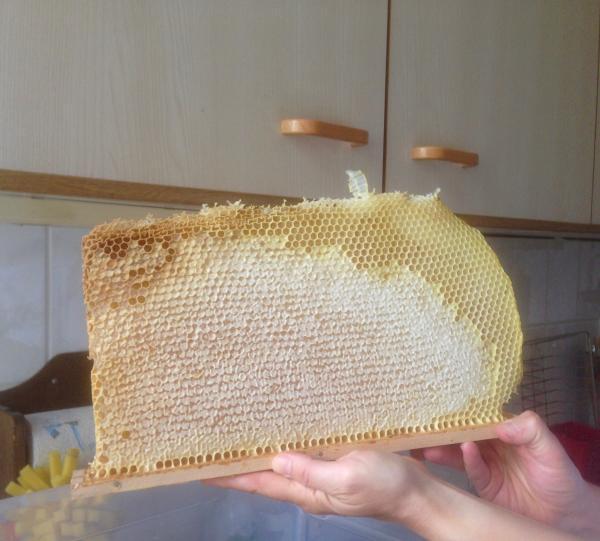 """<a href=""""/profile-mitgliederprofil/314"""">Wesensgemässe Bienenhaltung in der Bienenkiste</a>"""